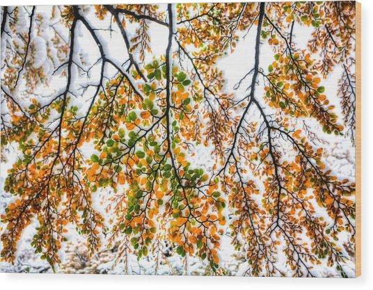 Autumn Snow Wood Print by Roman St