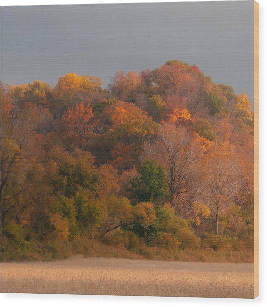 Autumn Splendor Wood Print