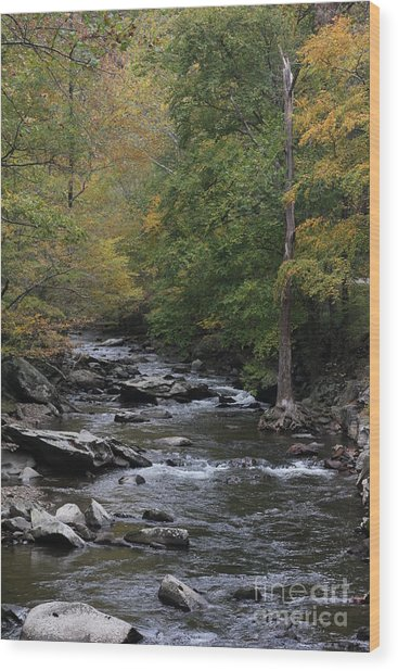 Roaring Stream In The Smokys Wood Print