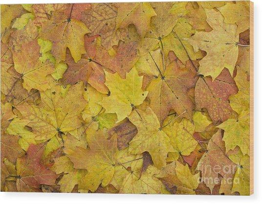 Autumn Sugar Maple Leaves Wood Print