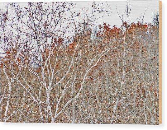 Autumn Sycamores Wood Print