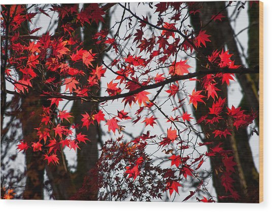 Autumn Time Wood Print