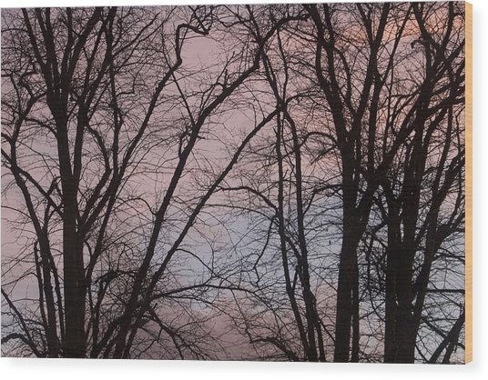 Autumn Trees Wood Print by Paul Muscat