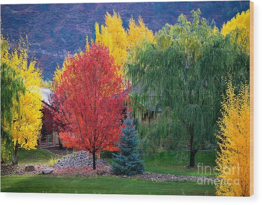 Autumn Trio Wood Print