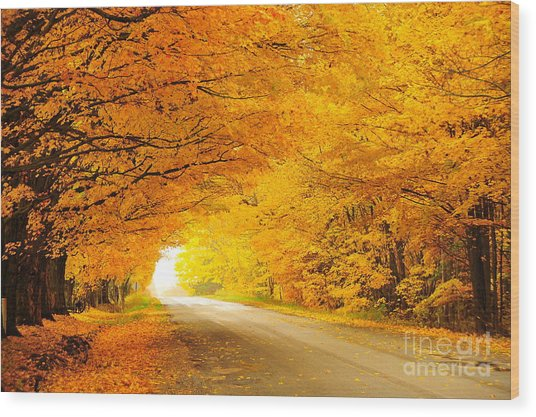 Autumn Tunnel Of Gold 8 Wood Print