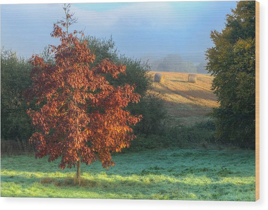 Autumn View Wood Print
