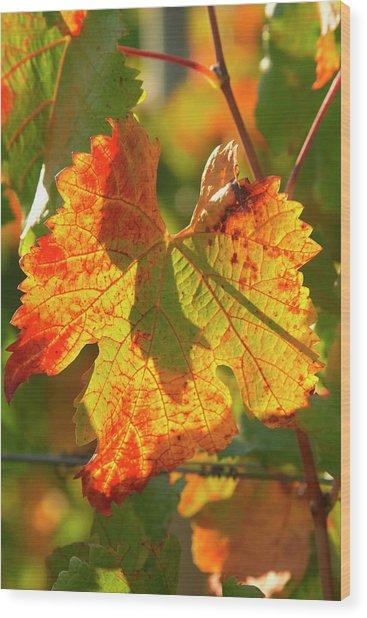 Autumn Vine Leaf, Vineyard Wood Print by David Wall