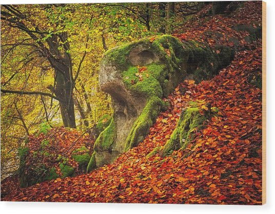 Autumn Walk In Forrest Wood Print