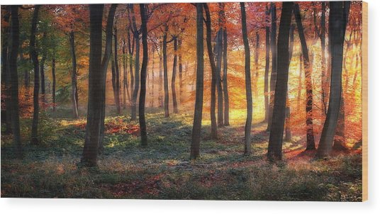 Autumn Woodland Sunrise Wood Print by