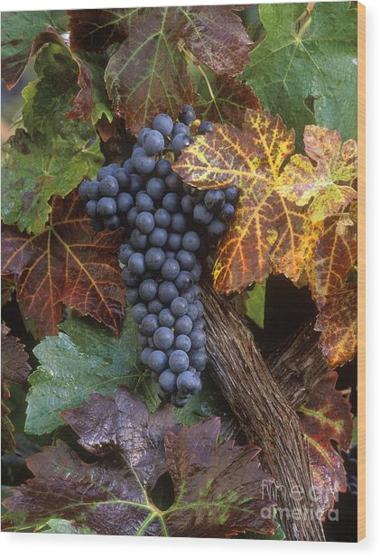 Autumn Zinfandel Cluster Wood Print