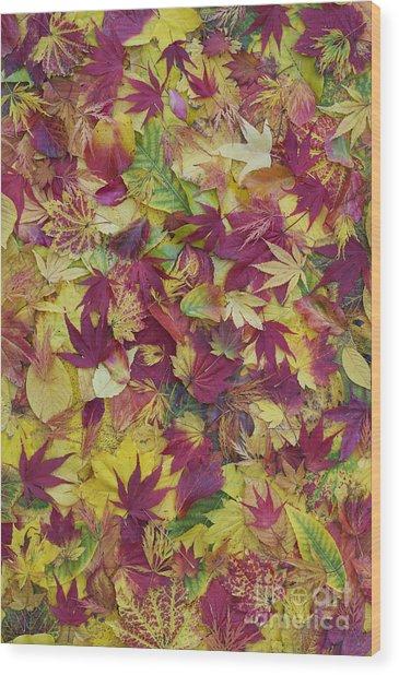 Autumnal Acer Leaves Wood Print