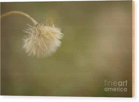 Autumnal Dandelion Fluff Wood Print by Jolanta Meskauskiene