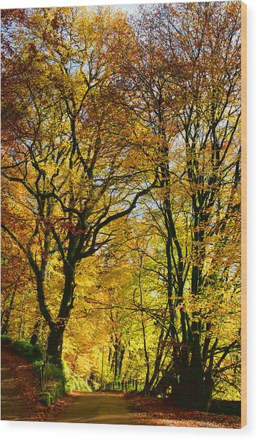 Autumnal Lane Dulverton Wood Print