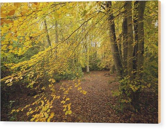 Autumnal Woodland II Wood Print by Natalie Kinnear