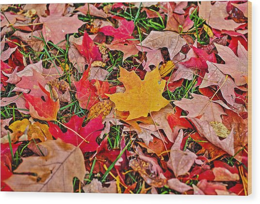 Autumn's Blanket Wood Print by SCB Captures