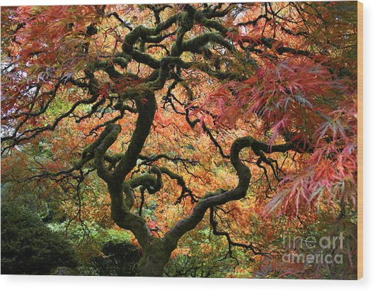 Autumn's Fire Wood Print