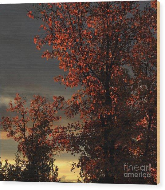 Autumn's First Light Wood Print