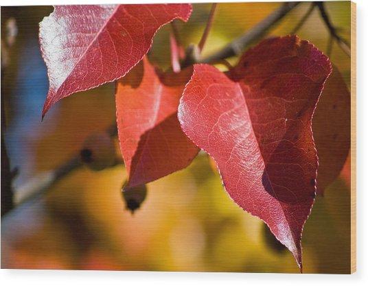 Autumn's Three Graces Wood Print