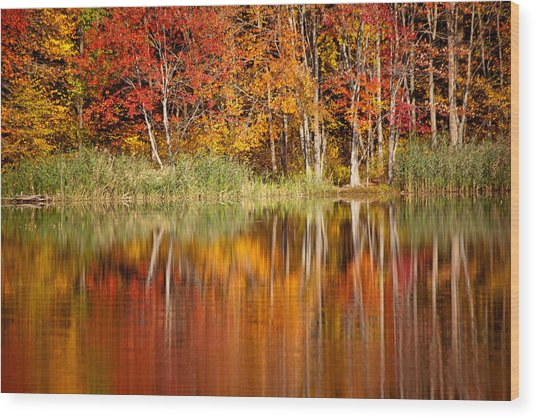 Autumns True Colors Wood Print