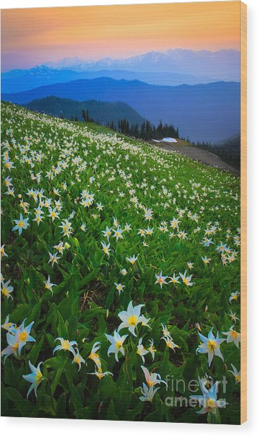 Avalanche Lily Field Wood Print