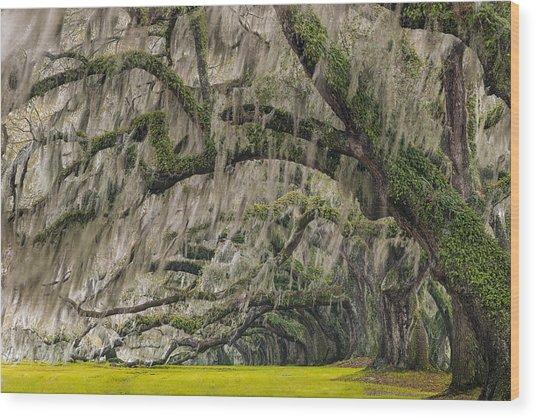 Avenue Of Oaks Wood Print