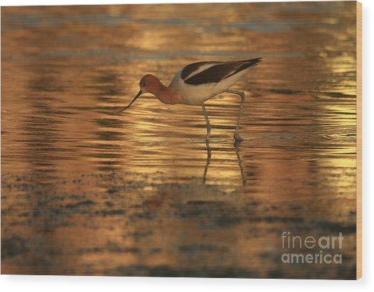 Avocet Gold Wood Print