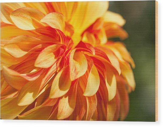 Awesome Blossom Wood Print