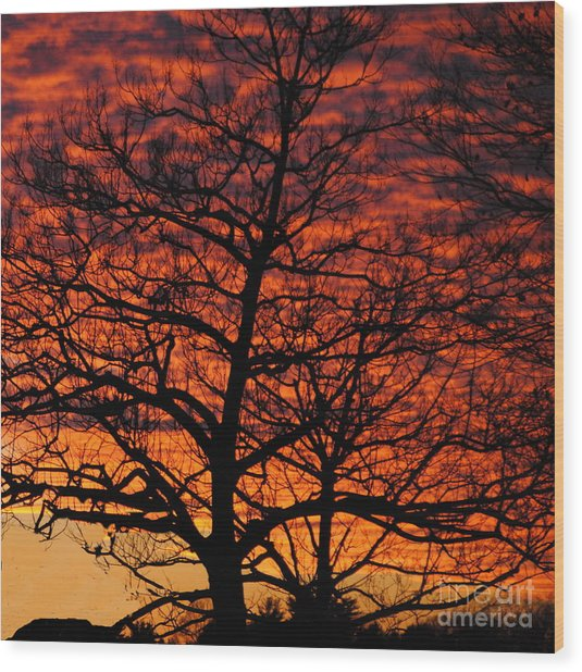 Awesome Winter Sunset - Longwood Gardens - Square Wood Print by Jacqueline M Lewis
