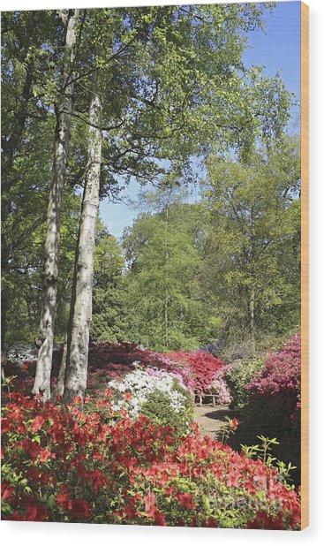 Azalea Flowers Wood Print