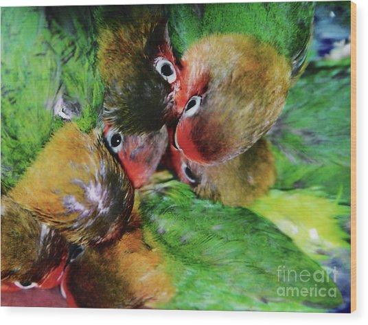 Baby Bird Nest In Hong Kong Bird Market Wood Print