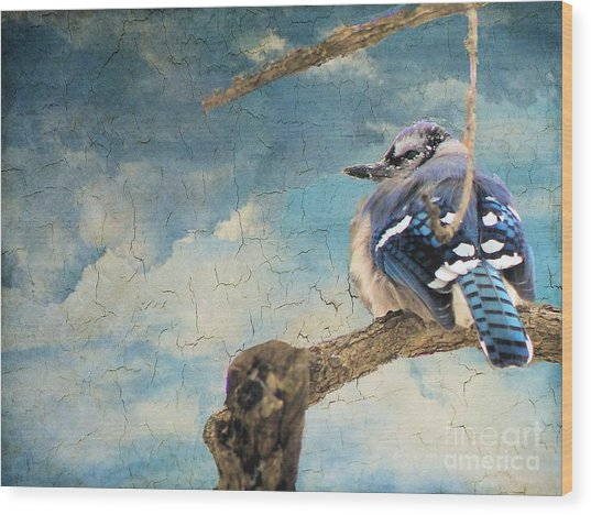 Baby Blue Jay In Winter Wood Print