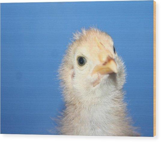 Baby Chicken Wood Print by Carolyn Reinhart
