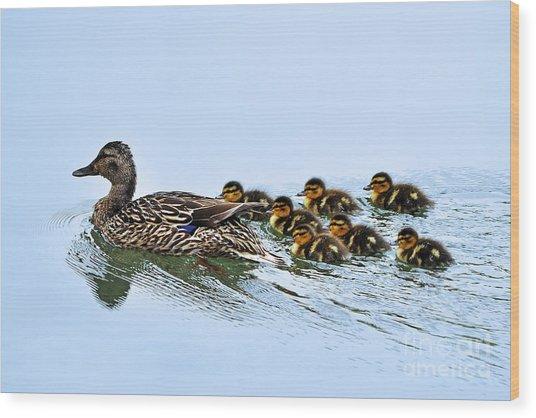 Baby Ducks Follow Wood Print