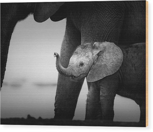 Baby Elephant Next To Cow  Wood Print