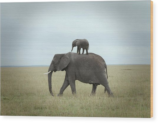 Baby Elephant On The Back Of His Mother Wood Print by Buena Vista Images