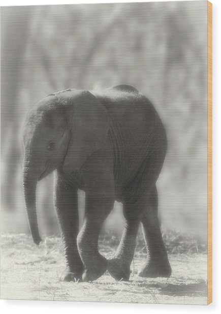 Wood Print featuring the photograph Baby Elephant Sepia by Gigi Ebert