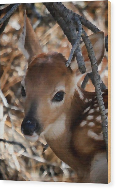 Baby Face Fawn Wood Print