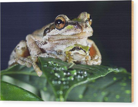 Baby Frog And Mama Frog Wood Print