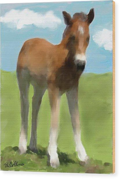 Baby Horse Wood Print
