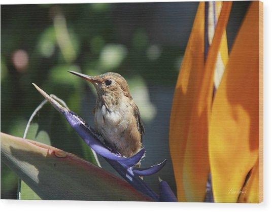 Baby Hummingbird On Flower Wood Print