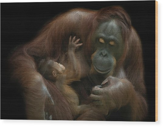 Baby Orangutan & Mother Wood Print