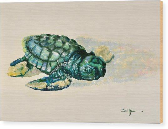 Da150 Baby Sea Turtle By Daniel Adams  Wood Print