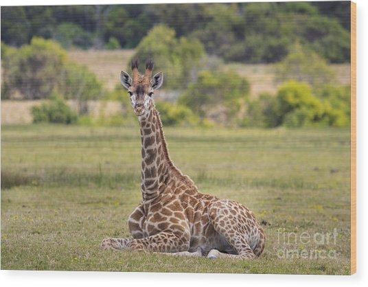Baby Series Giraffe Wood Print