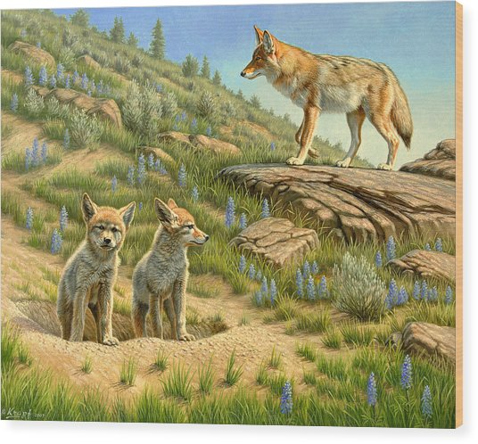 Babysitter  -  Coyotes Wood Print