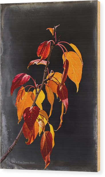 Wood Print featuring the photograph Back Light Cottonwood Leaves by Fred Denner