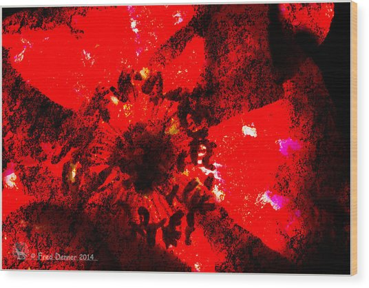 Wood Print featuring the photograph Back Light Poppy by Fred Denner