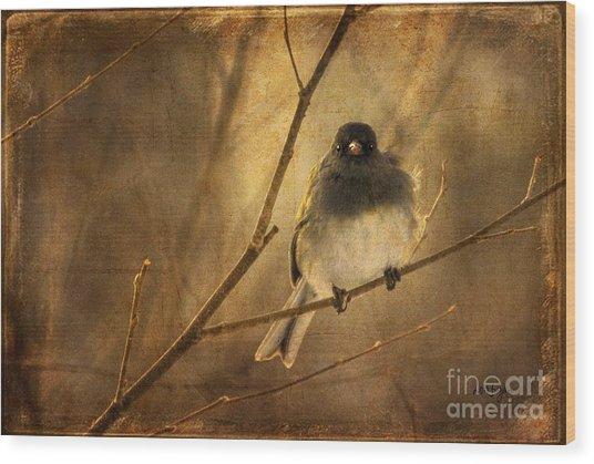 Backlit Birdie Being Buffeted  Wood Print