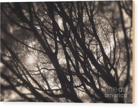 Backlit Branches Of A Majestic Tree I Wood Print
