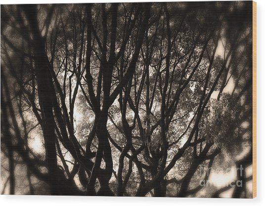 Backlit Branches Of A Majestic Tree II Wood Print