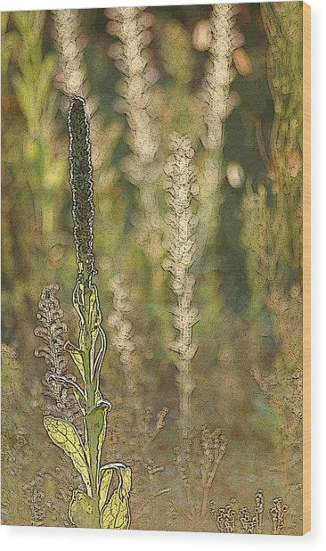 Backlit Mullein In A Meadow Wood Print